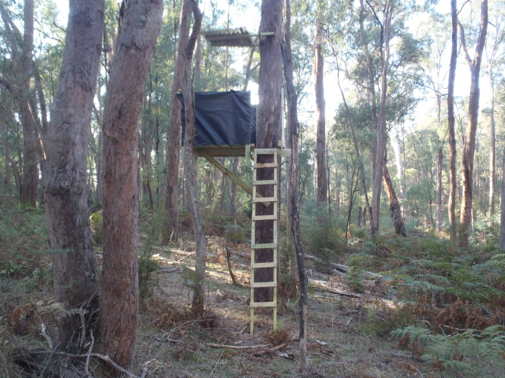 Diy ladder stand blind diy do it your self for Free tree stand